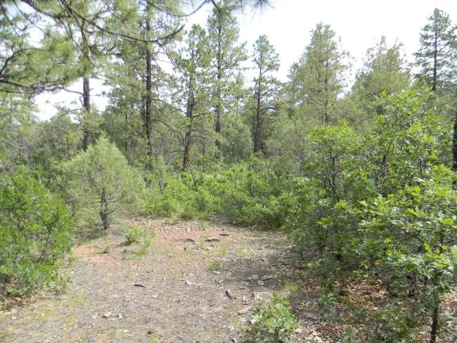 Photo of home for sale at Unit 7, Tract 24, Ponderosa, Chama NM